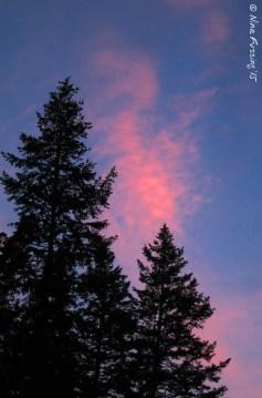 Sunset pink