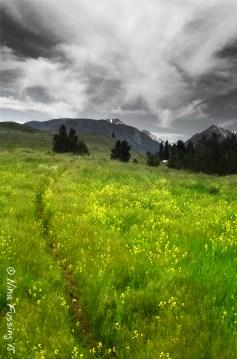 Hills of flowers