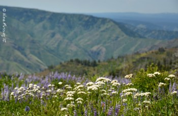 Wildflowers & views