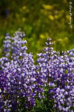 Deep purples