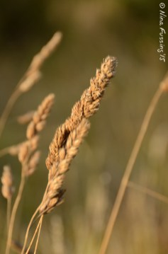 Grassy pretty