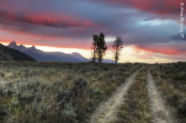 Dog-friendly hiking by Gros Ventre Campground