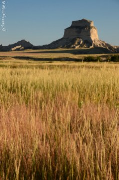 Grassy plains