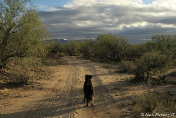 Walking with doggie on BLM land behind the park