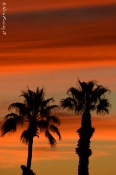 Palm tree stripes