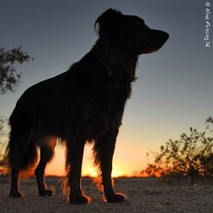 Doggie in the desert