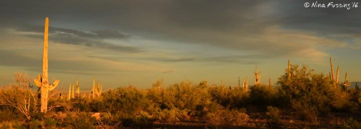 Golden hour in the desert