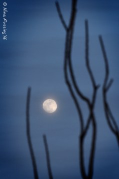 Misty moonrise
