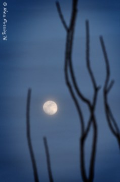 Misty moonrise