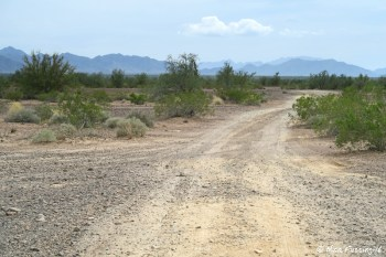 One of the many dirt roads leading off Plamosa. Most are pretty flat and hard, but some have a few bumps.