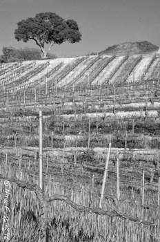 Vine textures. They're mesmerizing