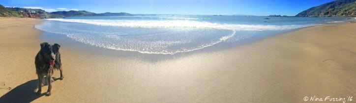 Polly at Avila Doggie Beach