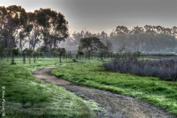 Lovely Schollenger Park on a misty morning walk