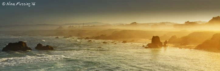 Misty morning on the coastal trail in Fort Bragg....just magical!