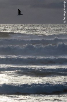 Do you feel that ocean breeze?