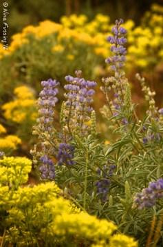 Wood River Trail wildflowers