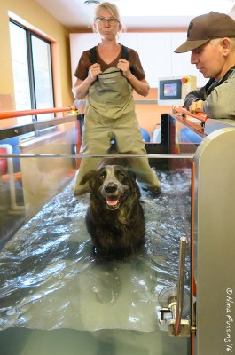 Hydrotherapy has been AWESOME!