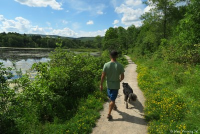 Walking Polly on the lovely trail around Indian Point