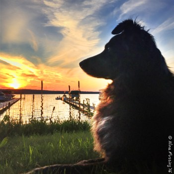 Dog and sunset...magical!