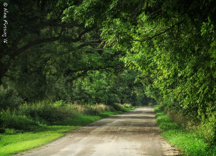 We're in a gorgeous area of romantic tree-lined roads