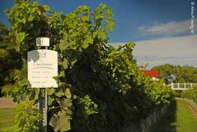 Chardonnay vines at Brys Estate