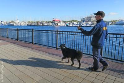 Walking Polly along the water towards the Warren Street Ferry