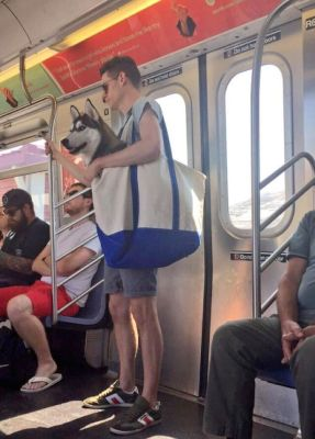 Have dog bag? Can travel! Pic from twitter