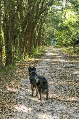 On the lovely trails at Alafia