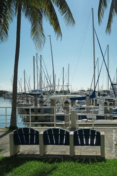 Waterfront Coconut Grove