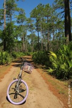 Daytime Trails