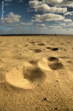 Cape Cod Steps