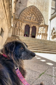 Polly relaxes in the shade of the grand entrance to the Cathedral