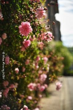 Camon pink