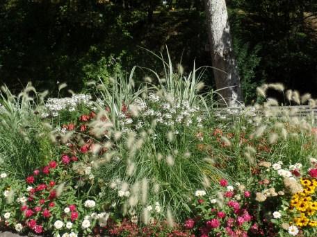 Blütenpracht am Kurpark