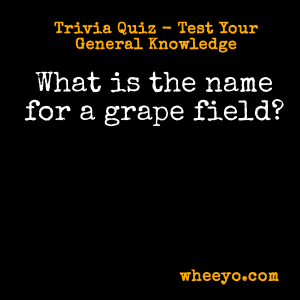 Wine Trivia Questions_Name for Grape Field