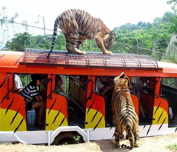 Zoobic Safari Family Adventure, Philippines