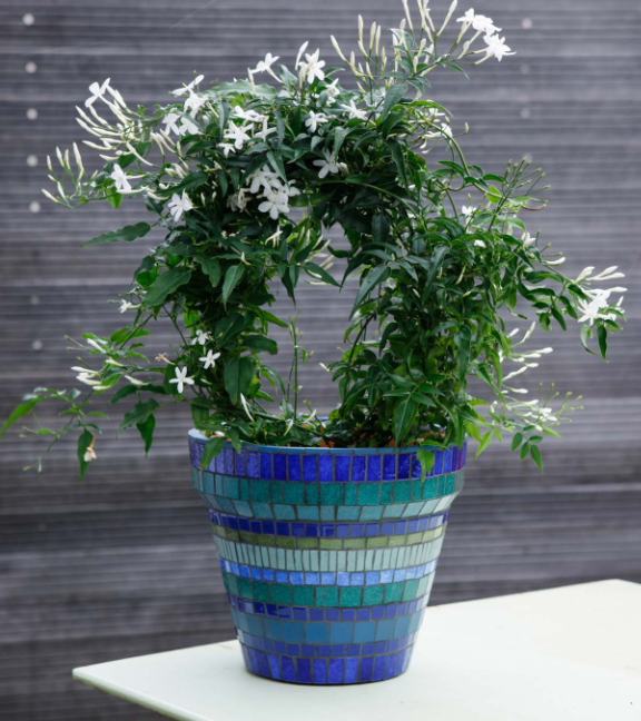 Striped Flowerpot Photograph