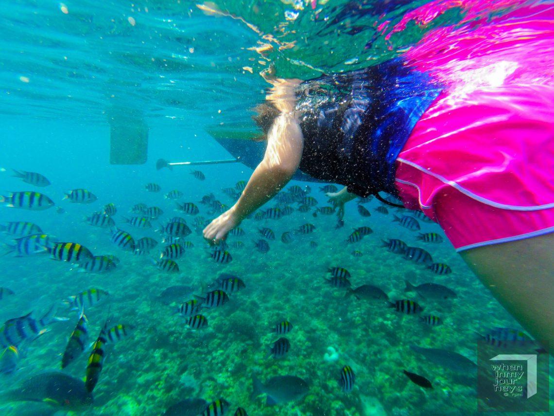 Il Sogno Fish Sanctuary