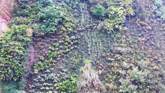 Green wall near Museo Nacional del Prado