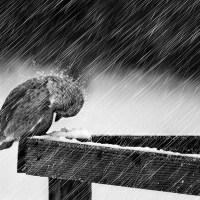 Surely It Will Rain|बारिशें होंगी … ज़रूर होंगी … | بارشیں ہوں گی … ضرور ہوں گی