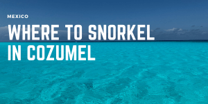 Best places to snorkel in cozumel, where to see turtles