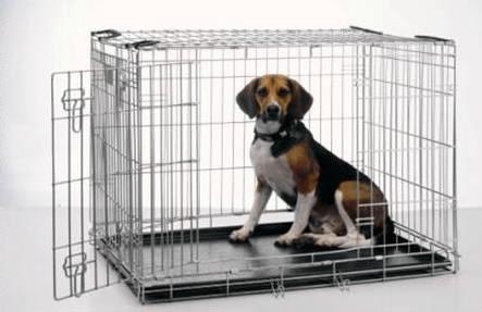 Crate Train Puppy