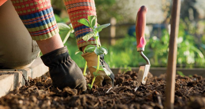 14 Clever Gardening Tips & Tricks