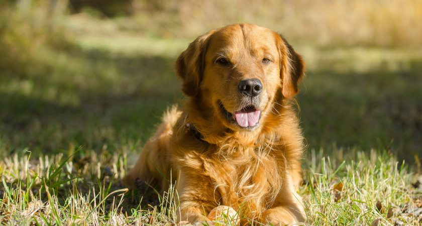 6 Products That Can Keep Your Pet Healthy
