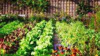 3 Ways to Make Your Garden More Fun