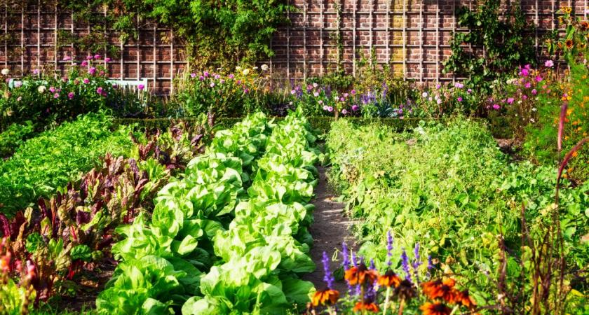 3 Ways to Make Your Garden More Fun