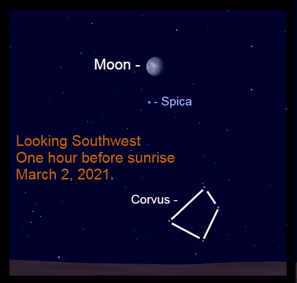 2021, March 2: The bright gibbous moon is visible 5.1° upper right of Spica.