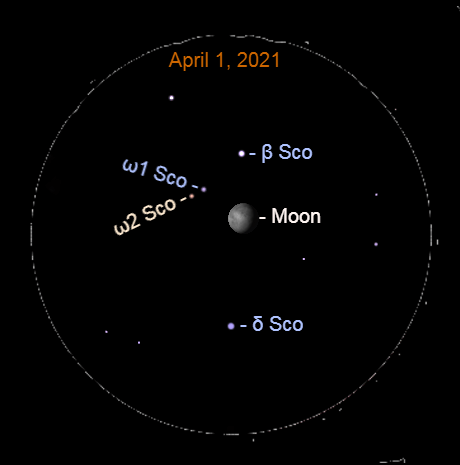 April 1, 2021: Before sunrise, use a binocular to see the gibbous moon and the starfield Scorpius. Notice the contrasting star colors.