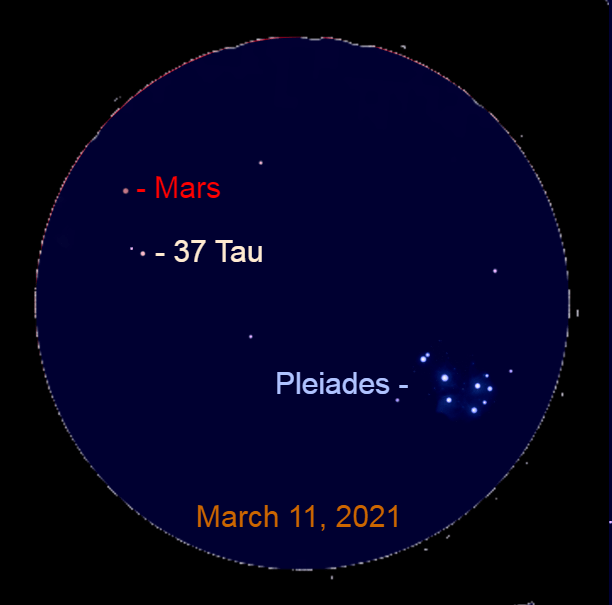 2021, March 11: In this simulated binocular view, Mars is 0.8° to the upper left of 37 Tauri (37 Tau). The Pleiades star cluster is still in the binocular field of view with the planet.