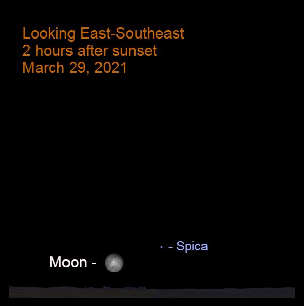 2021, March 29: Two hours after sunset, the bright moon is 7.0° to the lower left of Spica.